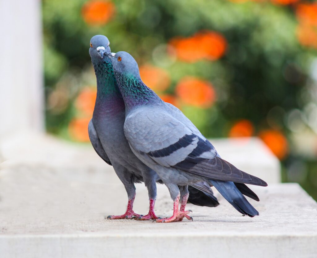 how do birds reproduce