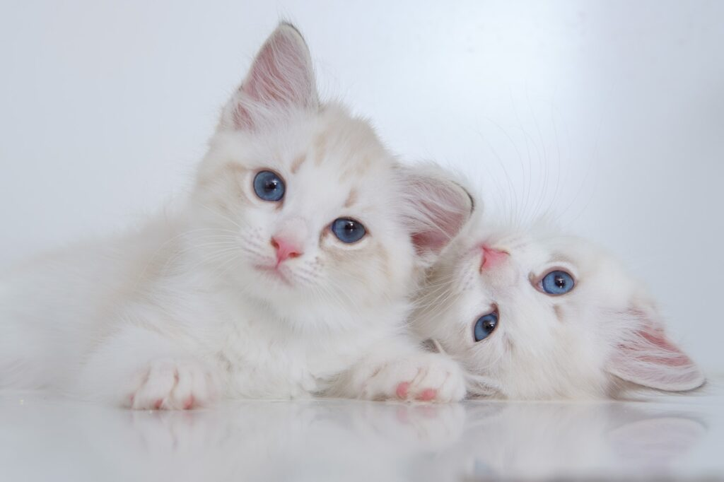 what is the average life expectancy of an indoor cat